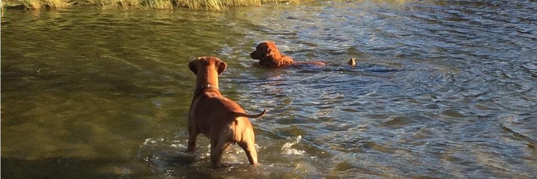 Wat is er allemaal mogelijk bij De Hondenoppasser?